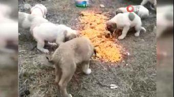 Aç Kalan Köpekler İçin Seferberlik