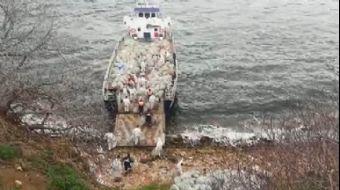 Adalar'da Fayton Temizliği; 25 Ton Atık Çıkarıldı