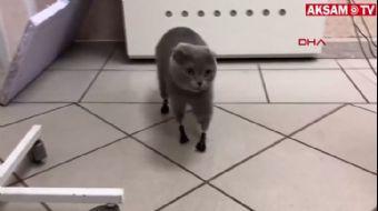 Soğukta Patilerini Kaybeden Kediye Protez Pati Yapıldı