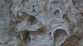 Bursa'da bir evin kömürlüğüne yuva yapan arılar, 7 kişilik ailenin rahat hareket etmesine izin vermi