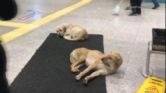 Köpekler Isınmak İçin Marmaray'a Sığındı