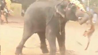 Hindistan´da bir festival sırasında çılgına dönen fil ortalığı savaş alanına çevirdi.