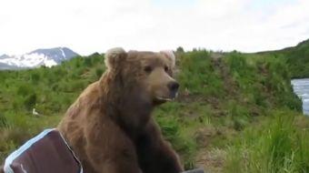 Ünlü belgeselci Drew Hamilton ayıların avlanma zamanlarını çekmek için gittiği McNeil nehrinde çok i