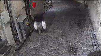 Güvercin Hırsızları Güvenlik Kamerasında
