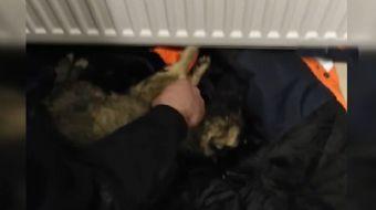 Soğuktan Donan Köpeği Kalp Masajı İle Hayata Döndürdü