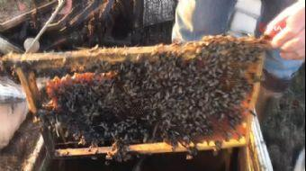 Çanakkale'de 30 Kovan Arı Yandı