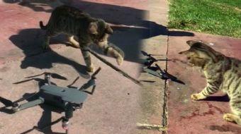 Sevimli Kedinin Drone Merakı