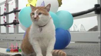 Kırım Köprüsü'nün Maskotu Kediye Doğum Günü Sürprizi
