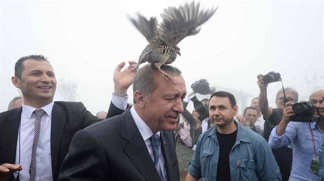 На открытии мечети Эрдогана атаковала птица