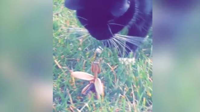 B�cek kediyi b�yle kovdu