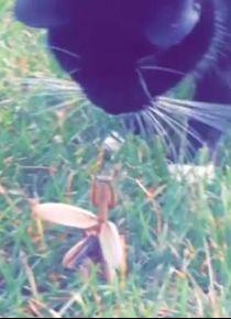 Böcek kediyi böyle kovdu
