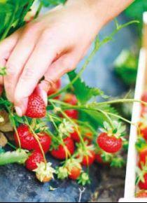Organik beslenmek l�ks de�il, zorunluluk!