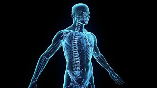 İnanılmaz! İnsan vücudunda yeni bir organ keşfedildi