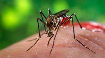 Boğaziçi Üniversitesi zıka virüsü için araştırma başlattı