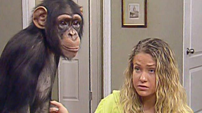 90'lı yıllara damga vuran maymun Çarli'ye ne oldu?
