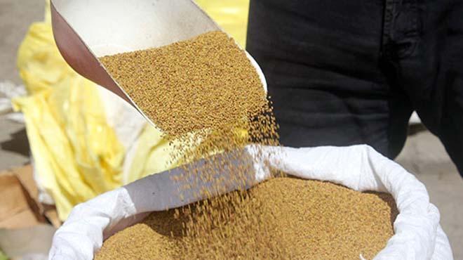 Yoncanın fiyatı altınla yarışıyor