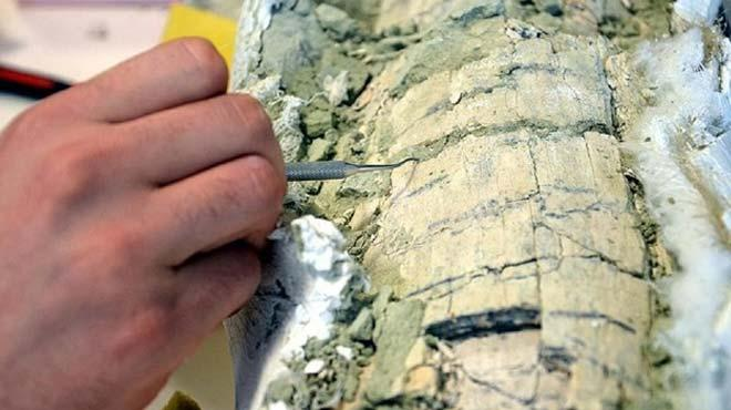 %C3%87in%E2%80%99de+66+milyon+y%C4%B1ll%C4%B1k+timsah+fosili+bulundu+