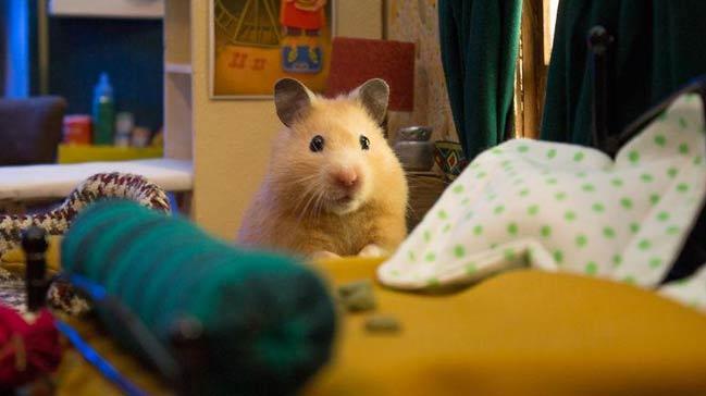 Hamster köyü kurmak için 1984 saat çalıştılar