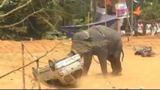 Öfkeli fil festival  alanını yerle bir etti
