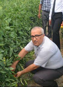 Çameli domatesi Arabistan'a gitmek için yola çıktı