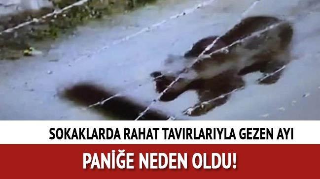 Sivas Gemerek'e ayı inince belediye vatandaşları uyardı