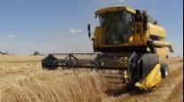 Çiftçilerin zorlu buğday hasadı