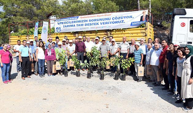 Mersin'de belediyeden üreticiye tropik destek