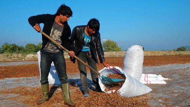 Salçadan geriye kalanı kurutup 300 liraya satıyor