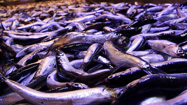 Karadeniz hamsisinin fiyatı 20 lirayı gördü