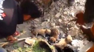 Zifte bulunan yavru köpekler son anda kurtarıldı