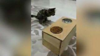 Engelli kedisi için bunu yaptı!