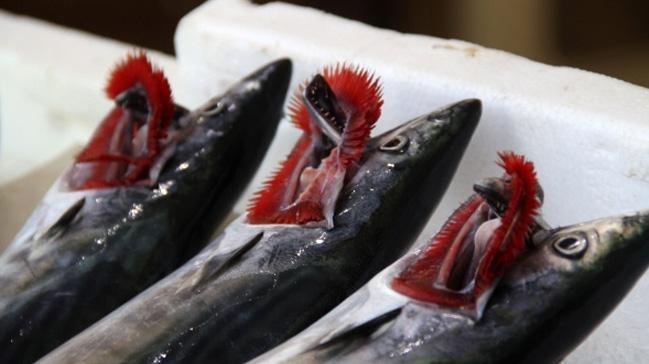 Kıyı balıkçılarının yüzü palamutla güldü