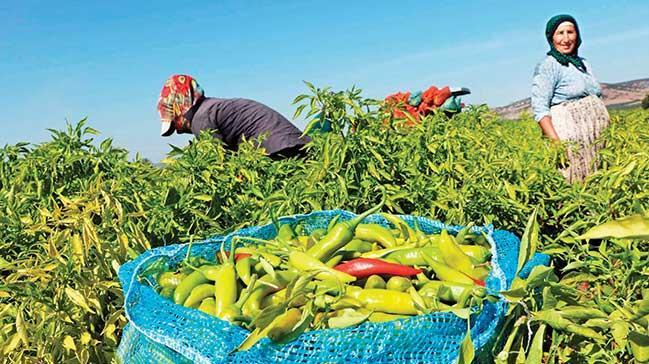 Organik tarım yapançiftçi sayısı 90 bini aştı