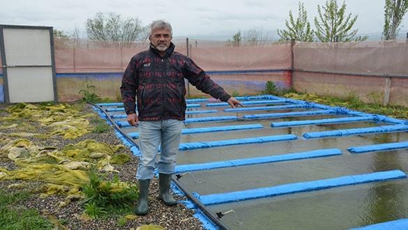 Okuduğu makaleden etkilenerek kurbağa çiftliği kuran emekli öğretmenin hedefi ihracat