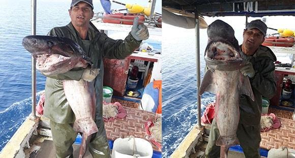 Antalyalı balıkçı yakaladı! 15 kilo