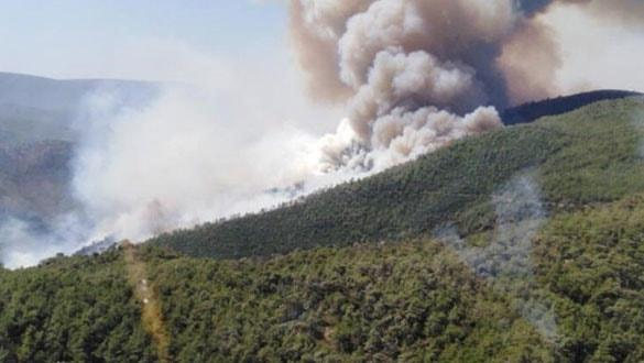 Son dakika... Muğla ve İzmir'de orman yangınları