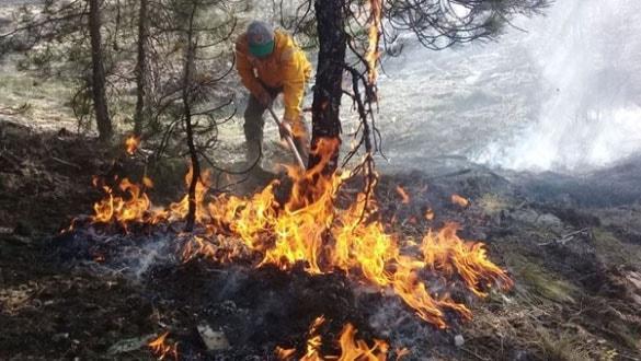 Orman yangınlarına karşı 'gönüllü' seferberliği