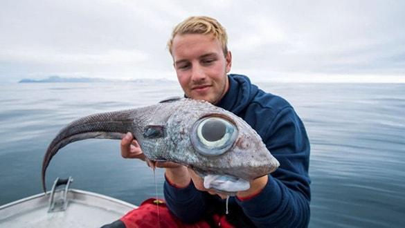 Korkudan denize düşüyordu: 'Uzaylı balık' yakalandı