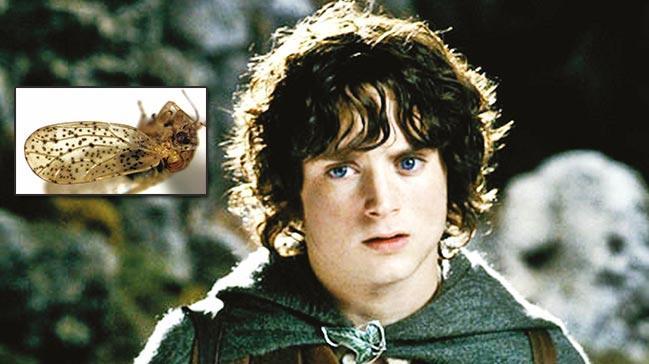 Frodo Bagginsböcek adı oldu