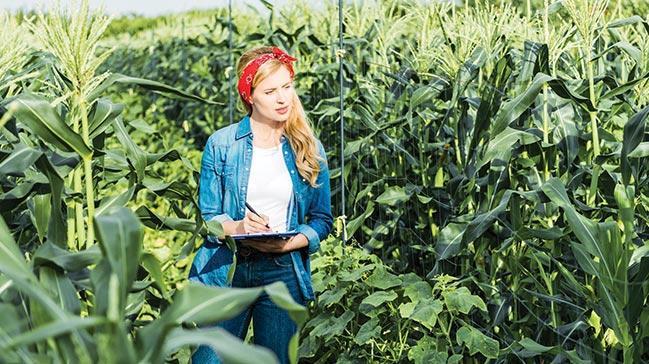 Gıda devleri el ele verdi: Çözüm onarıcı tarımda