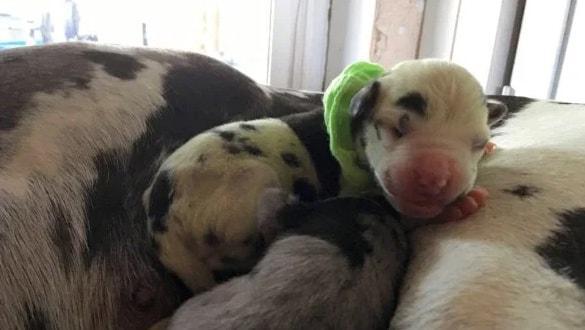 Yeşil renkte doğan köpek görenleri hayrete düşürdü