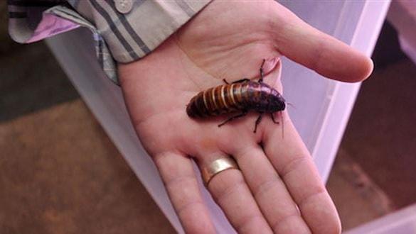 Çin'de genç adamın kulağından 'hamam böceği ailesi' çıkarıldı