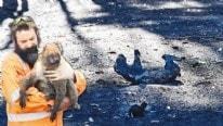 10 milyon hektar kül oldu