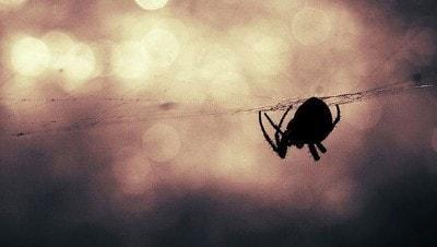 Yangın, toz fırtınası, dolu, selin vurduğu Avustralya'da zehirli örümcek uyarısı