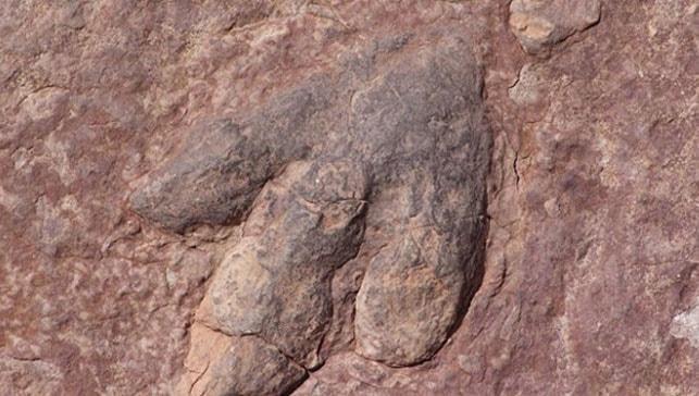 Kanada'da 11 milyon yıllık dinozor fosili bulundu