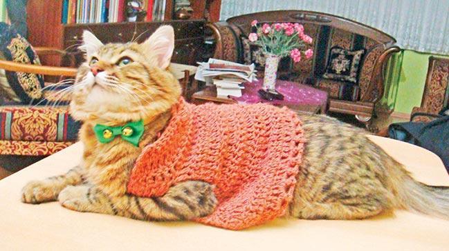 Kedim olmadan asla! Parola: Her eve bir kedi