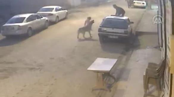 Dehşeti yaşayan adam sokak köpeklerinin saldırısından böyle kurtuldu!