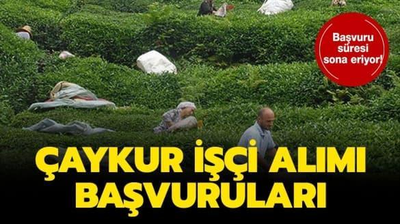 """İŞKUR Çaykur işçi alımı şartları neler"""""""