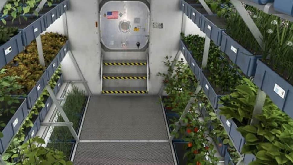 NASA: Uzay istasyonunda yetiştirilen marullar besleyici ve güvenli