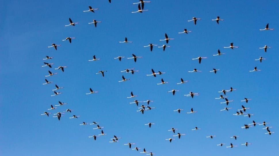 Flamingoların Tuz Gölü durağında renkli görüntüler oluştu